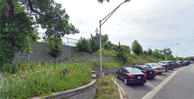 A photo of greenery and wild plants along the Metra tracks at Foster and Ravenswood